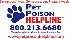 Http Www Petpoisonhelpline Com Uncategorized Home Dental Care Dogs Cats