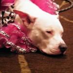 BlogPaws party dog