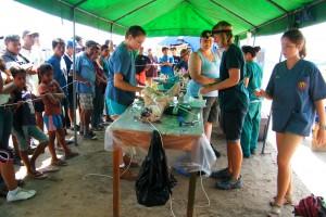 volunteer vets