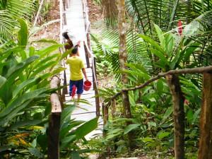 amazon pathway
