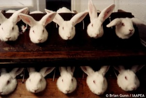 animal testing of cosmetics