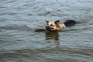 dog-friendly summer