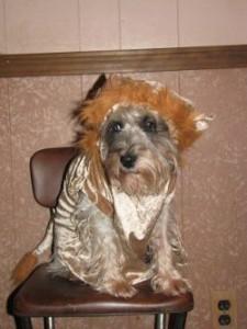 Malarky on Halloween for Dancing Dog Blog