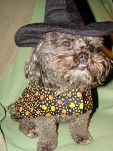 Doris on Dancing Dog Blog