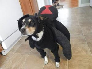 Dancing Dog Blog Halloween