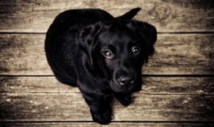 Illinois Animal Welfare Act