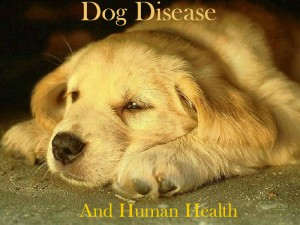 Dog diseases transmitted to humans