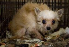 puppy mills fight change