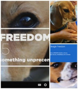 BeagleFreedom2