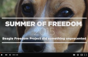 BeagleFreedomProject3