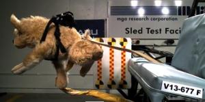 Pet seat belt safety fail