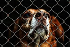 dog behavior studies