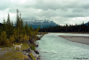 Annie checks out the Athabasca River in Canada